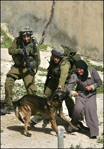 بوليسي اسرائيلي ينهش عجوزا فلسطينية...