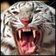 صياد النمور