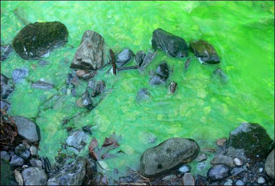 صورة رقم 3 - في مشهد مذهل.. مياه نهر اصطبغت باللون الأخضر!!