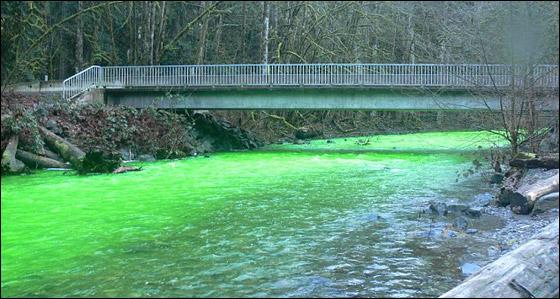 صورة رقم 4 - في مشهد مذهل.. مياه نهر اصطبغت باللون الأخضر!!