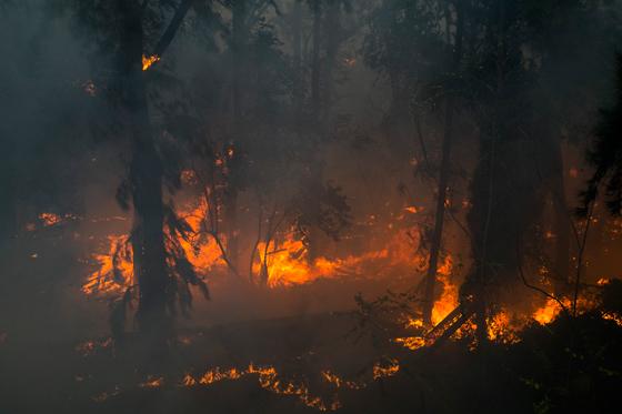 صورة رقم 10 - عجز اسرائيل في مواجهة الحرائق حجب ثقة عن نتنياهو الذي يؤثر النباح على العرب