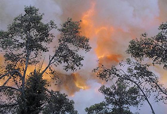 صورة رقم 17 - عجز اسرائيل في مواجهة الحرائق حجب ثقة عن نتنياهو الذي يؤثر النباح على العرب