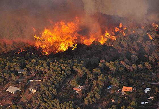 صورة رقم 32 - عجز اسرائيل في مواجهة الحرائق حجب ثقة عن نتنياهو الذي يؤثر النباح على العرب
