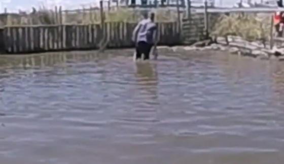 صورة رقم 1 - فيديو مرعب.. شاب يتصارع مع تمساح وكاد يتحول إلى وجبة