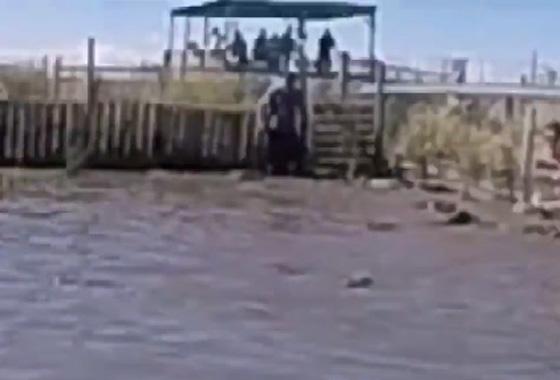 صورة رقم 2 - فيديو مرعب.. شاب يتصارع مع تمساح وكاد يتحول إلى وجبة