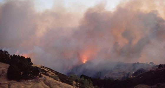حرائق غابات ضخمة في نيوزيلندا تتسبب بنزوح الآلاف عن بيوتهم صورة رقم 5