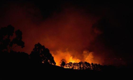 حرائق غابات ضخمة في نيوزيلندا تتسبب بنزوح الآلاف عن بيوتهم صورة رقم 6