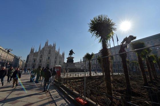 اشجار نخيل في محيط كاتدرائية ميلانو تثير جدلا في ايطاليا صورة رقم 10
