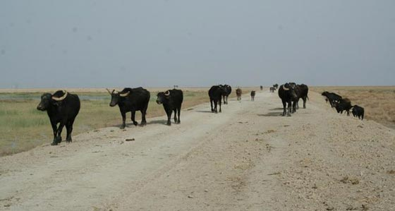 صورة رقم 3 - اجمل صور سحر الطبيعة الخلابة في العراق، بين الجبل والبحر..