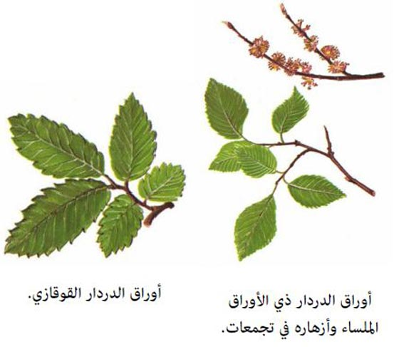 صورة رقم 3 -  أعشاب طبية وتوابل تحميكم من مرض السرطان وتعالج المصابين به!