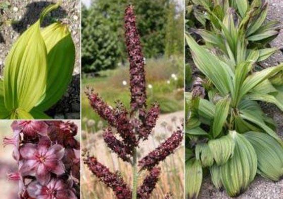 صورة رقم 8 -  أعشاب طبية وتوابل تحميكم من مرض السرطان وتعالج المصابين به!
