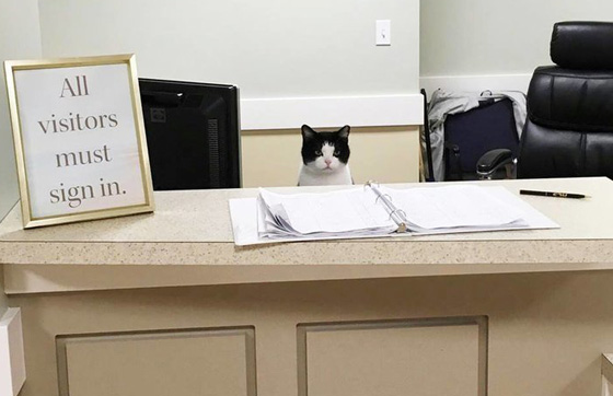صورة رقم 1 - فيديو وصور.. تعرفوا على القطة المشردة (أوريو) ووظيفتها في دار رعاية