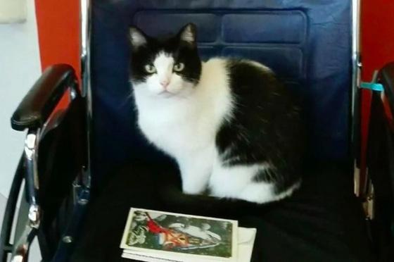 صورة رقم 5 - فيديو وصور.. تعرفوا على القطة المشردة (أوريو) ووظيفتها في دار رعاية