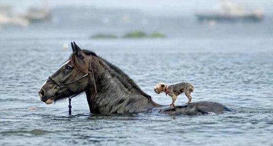 صورة رقم 21 - صور طريفة.. اغرب المساعدات حول العالم، يحملون بعضهم بعضا!
