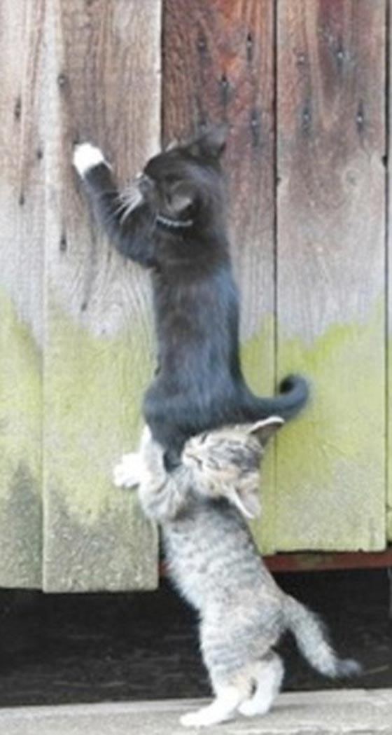 صورة رقم 9 - صور طريفة.. اغرب المساعدات حول العالم، يحملون بعضهم بعضا!