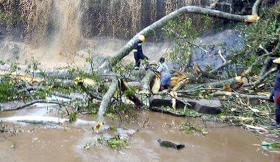 صورة رقم 1 - حادث غير عادي.. الاشجار تقتل 20 طالبا اثناء رحلة استجمام
