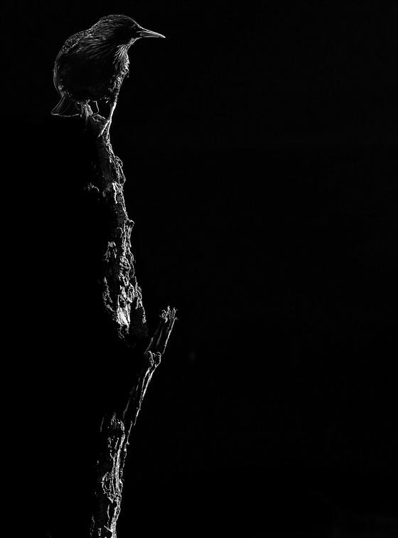 صورة رقم 10 - مجموعة صور مدهشة التقطت باستخدام التفاوت بين الظل والضوء