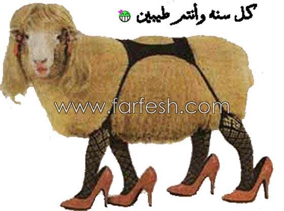 صورة رقم 11 - صور مضحكة: 32 كاريكاتير خروف العيد، وكل عام وأنتم بخير..