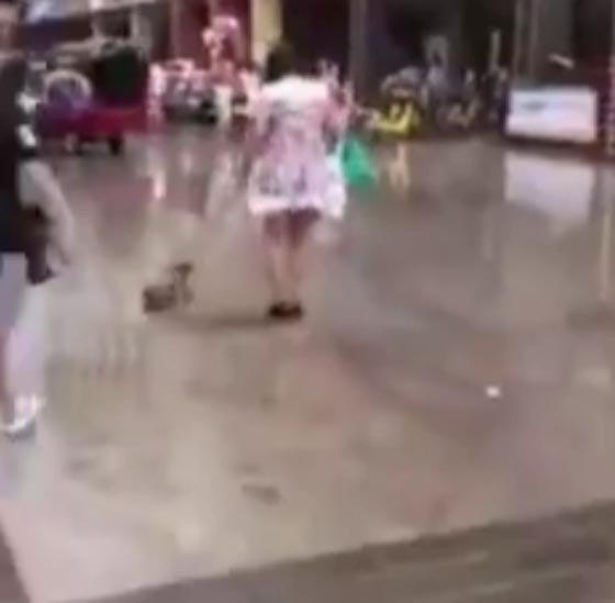 فيديو مثير.. امرأة تفزع المارة بوحشيتها تجاه كلبها الصغير صورة رقم 2