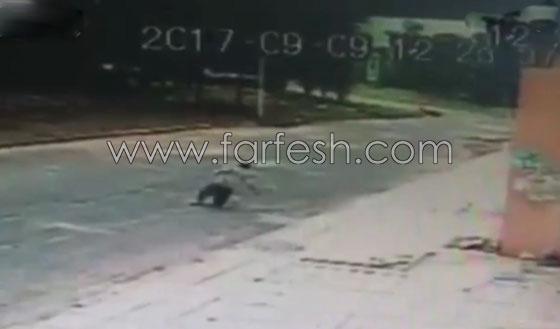 فيديو مروع.. لحظة سقوط رجل من الطابق السادس وارتطامه بالأرض صورة رقم 2