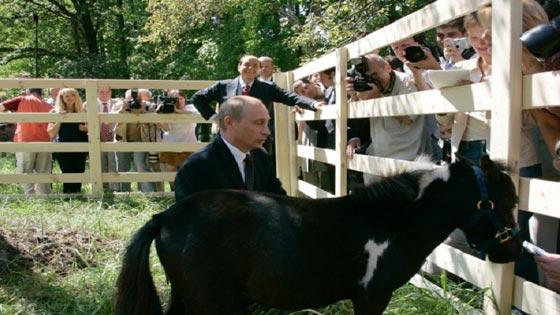 من الكلاب والخيل وحتى الوحوش والزواحف.. هذه هي حيوانات بوتين صورة رقم 1