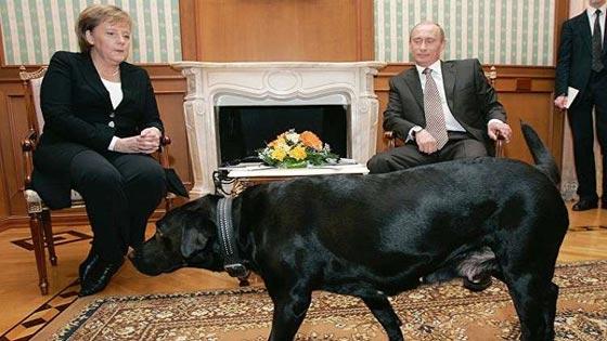 من الكلاب والخيل وحتى الوحوش والزواحف.. هذه هي حيوانات بوتين صورة رقم 3