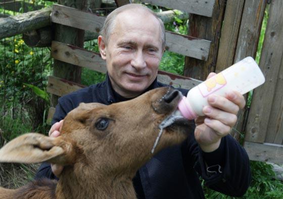من الكلاب والخيل وحتى الوحوش والزواحف.. هذه هي حيوانات بوتين صورة رقم 5