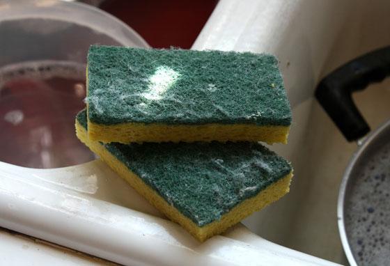صورة رقم 6 - احذروا.. إسفنجة غسل الصحون تحتوي على بكتيريا أكثر مما على المرحاض!