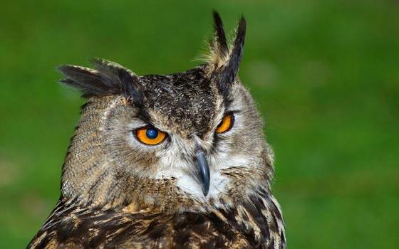 أشهر الطيور وصفاتها.. اي منهم الأقرب إلى شخصيتكم؟ صورة رقم 1