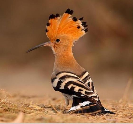 أشهر الطيور وصفاتها.. اي منهم الأقرب إلى شخصيتكم؟ صورة رقم 2