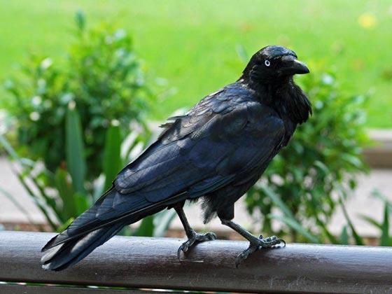 أشهر الطيور وصفاتها.. اي منهم الأقرب إلى شخصيتكم؟ صورة رقم 3