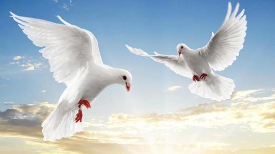 أشهر الطيور وصفاتها.. اي منهم الأقرب إلى شخصيتكم؟ صورة رقم 4