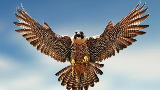 أشهر الطيور وصفاتها.. اي منهم الأقرب إلى شخصيتكم؟ صورة رقم 5