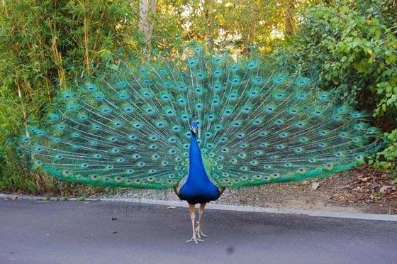 أشهر الطيور وصفاتها.. اي منهم الأقرب إلى شخصيتكم؟ صورة رقم 6