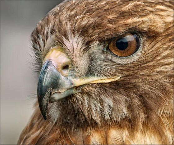 10 صفات وقدرات تميز الحيوانات عن الإنسان صورة رقم 1