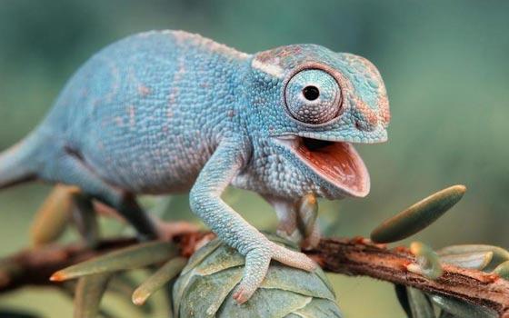 10 صفات وقدرات تميز الحيوانات عن الإنسان صورة رقم 6