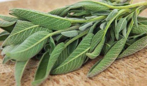 صورة رقم 3 - 3 اعشاب تحمي الدماغ  وتحسن الصحة العقلية