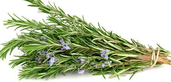صورة رقم 2 - 3 اعشاب تحمي الدماغ  وتحسن الصحة العقلية