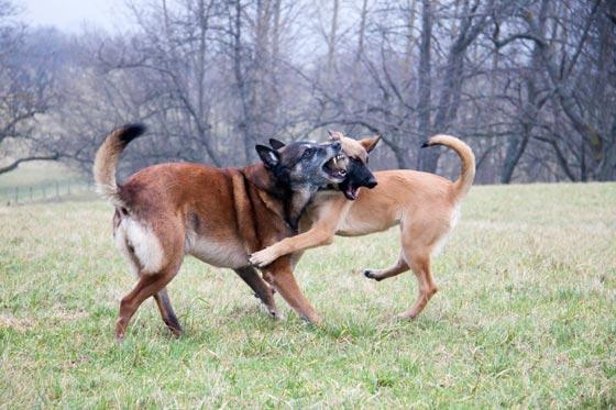 10 أحكام قضائية غريبة ضد حيوانات:محاكمة ببغاء يتحرش بالسيدات وديك ملحد! صورة رقم 5
