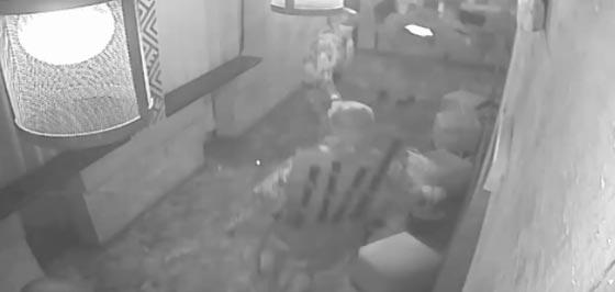 بالفيديو.. اهانة الرئيس الجورجي السابق وتهديده بالقتل صورة رقم 1