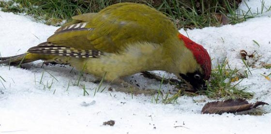 حيل وأسرار الحيوانات والطيور لمواجهة برد الشتاء القارس صورة رقم 2