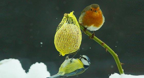 حيل وأسرار الحيوانات والطيور لمواجهة برد الشتاء القارس صورة رقم 3