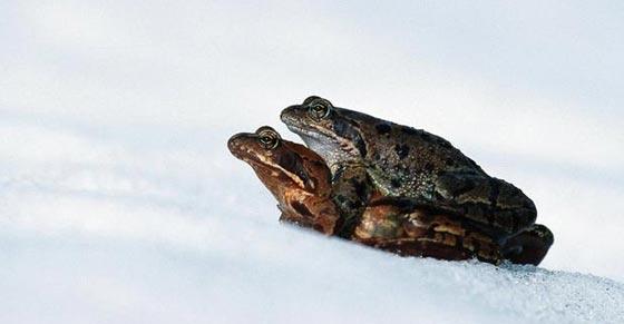 حيل وأسرار الحيوانات والطيور لمواجهة برد الشتاء القارس صورة رقم 10
