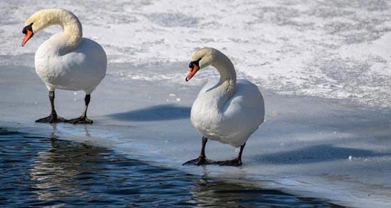 حيل وأسرار الحيوانات والطيور لمواجهة برد الشتاء القارس صورة رقم 1