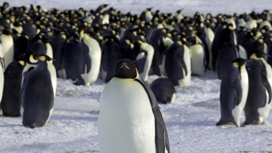 فيديو طريف:  سيلفي ظريف لبطريقان في القارة القطبية الجنوبية صورة رقم 4