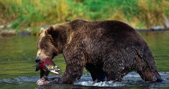 صورة رقم 4 - تعرفوا على حيوانات حطمت الأرقام القياسية بأحجامها