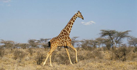 صورة رقم 6 - تعرفوا على حيوانات حطمت الأرقام القياسية بأحجامها