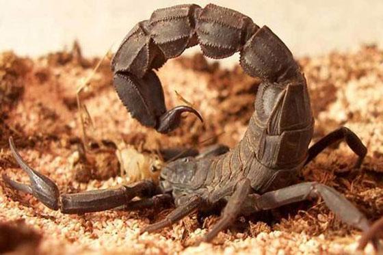 اغرب الأسلحة في الحروب: استخدام الحشرات صورة رقم 1