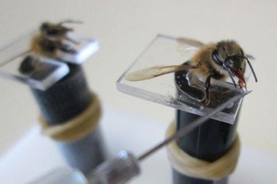 اغرب الأسلحة في الحروب: استخدام الحشرات صورة رقم 2
