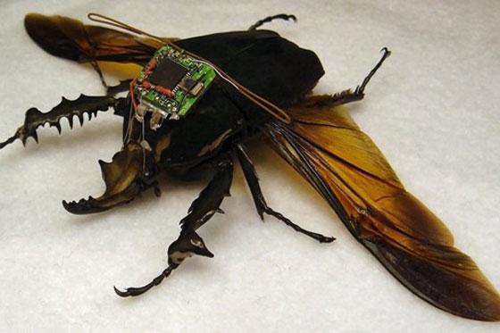 اغرب الأسلحة في الحروب: استخدام الحشرات صورة رقم 3
